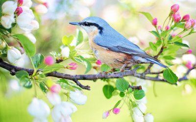 Comment bien vivre l'énergie du printemps et en tirer profit ?